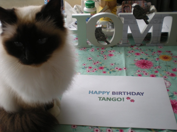 Happy birthday Tango
