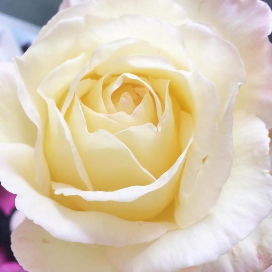 october-27-yellow-rose